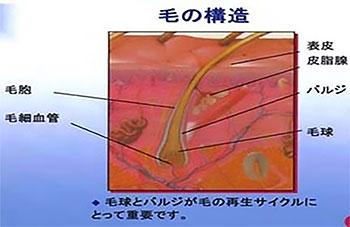 池袋セントラルクリニック|医療レーザー脱毛・完全マニュアル